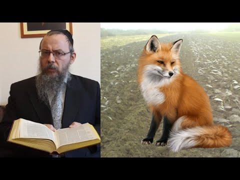 358 Miért nevet Akiva rabbi, amikor a többiek sírnak? – Oberlander Báruch (2 talmudi történet)